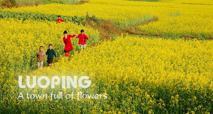 Luoping - the town of flowers.